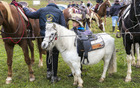 Veliki in mali konji in konjeniki