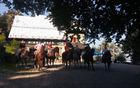Konjenica na Mirno goro