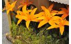 Žal papir ni obstojen na dežju, drugače bi te cvetlice krasile vsak vrt.