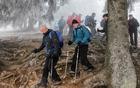Razgaljene korenine pod Domom na Joštu pričajo o številnih vsakodnevnih obiskovalcih (foto Tatjana Rodošek)