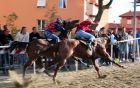 Ogled konjskih dirk v centru mesta je pravo doživetje