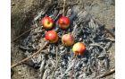Pečenje jabolk
