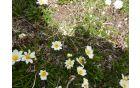 Pogled na cvetje