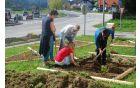Zasaditev zelišč