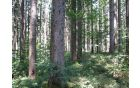 gozd ob poti
