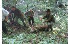 Za spravilo jelena je bila potrebna pomoč lovcev in motornega vitla. Foto: Aleksander Petrič