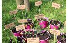 Rastline so prvošolci ob pomoči učiteljice Sabine lepo označili.