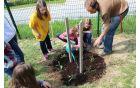 Ob pomoči Mihe smo posadili drevo asimina.