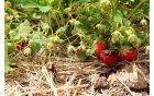 Sonaravno pridelano sezonsko sadje in zelenjava