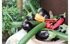 * Zdrava hrana, ekološka hrana.