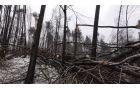 Vremenska ujma je najbolj prizadela gozdove.