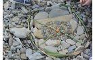 Mandala  na obali 1