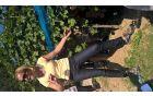 Simona Hauptman med strokovno razlago v vinogradu na Dednem vrhu