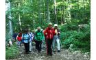 Pot skozi gozd ni dolgočasna, če opazuješ okolico in rastline