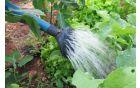 zalivanje-v-vrtu.jpg