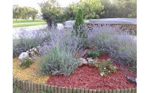 Cvetoča sivka - cvetlična greda v Turiški vasi