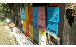 Ponos čebelarja