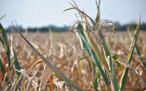 1755_1504605914_corn-907730_1920.jpg