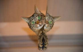 1755_1505989254_cat-697113_1920.jpg
