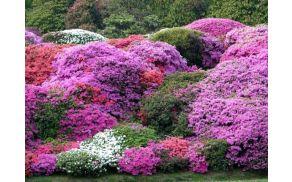 Spoznali boste zanimive zasaditvene kombinacije za vaš vrt
