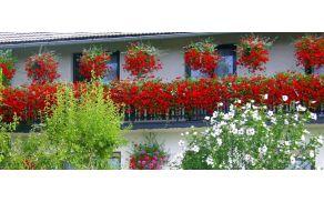 1_balkonsko-cvetje-april.jpg