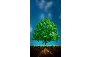 1_drevo.jpg