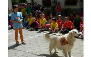 Kako ubogljiv je reševalni pes, so lahko preizkusili kar sami.