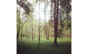 1_gozd.jpg