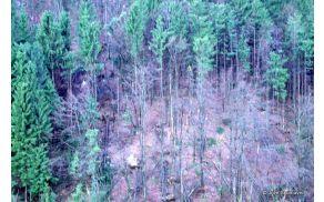 1_gozdovi1.jpg