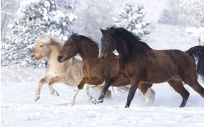 1_konji.jpg