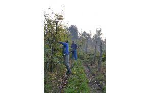Sadjar Janez Janša je s pridno ekipo v dveh dneh izpraznil sadovnjak, ki pa ga bo že spomladi ponovno napolnil, takrat z ekološkimi sortami.