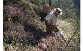 Prenašanje čebel - V. Luznar, dolina Završnice, 16.4.2015, foto: Brane Kozinc