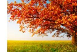 200_autumntreeleavesfieldgrass.jpg