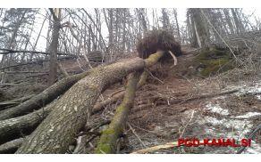 Žled je v Sloveniji poškodval 40 odstotkov gozdov. Foto: Danijel Markič