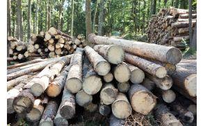 Žled in lubadar sta zdelala več kot 60.000 m3 drevja.
