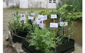 Izmenjamo domače pridelke, sadike, semena, nasvete...