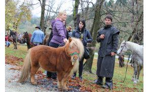 Šetlandski poni, najmanjši udeleženec dogodka