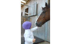2_konj.jpg