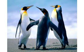 2_penguins.jpg