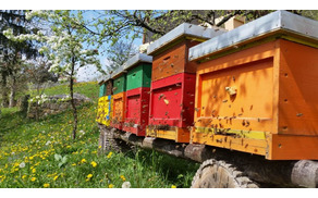 Čebele opravijo večino opraševanja v okolju