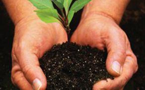 4251_1510137450_vrtnarstvogrmicekzasaditev-rastlin.jpg