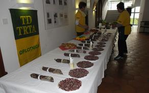 Oplotniška salamijada