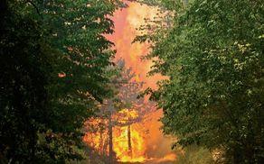 483_1503028685_ogenjvnaravi.jpg