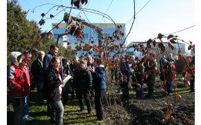 ŠK Vrt in zelišča - Rez sadnega drevja