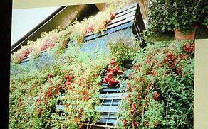 Balkon kot učinkovito nadomestilo zelenjavnega vrta