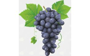59_1538051382_grape_png2960.jpg