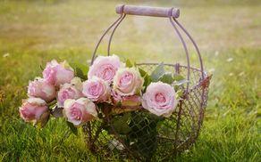 59_1539263791_roses-1566792_1920.jpg