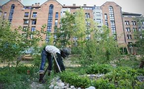 Onkraj gradbišča, urbani vrt in sadovnjak. Vir: deloindom.si