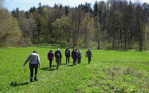 Pot preko travnikov ob Ribnikih v Dragi