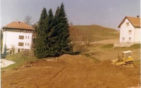 Srebrne smreke v času gradnje igrišča (foto: Milan Košir)